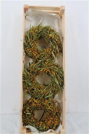 <h4>Wr Mimosa Naturel 23cm</h4>