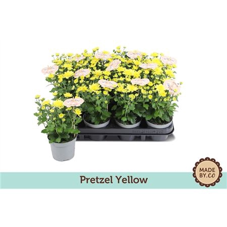 <h4>Chrys Yellow Garden</h4>