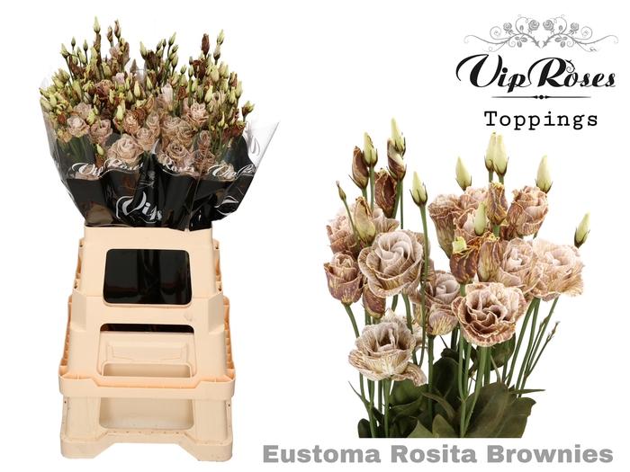 <h4>EUST G ROSITA BROWNIES</h4>