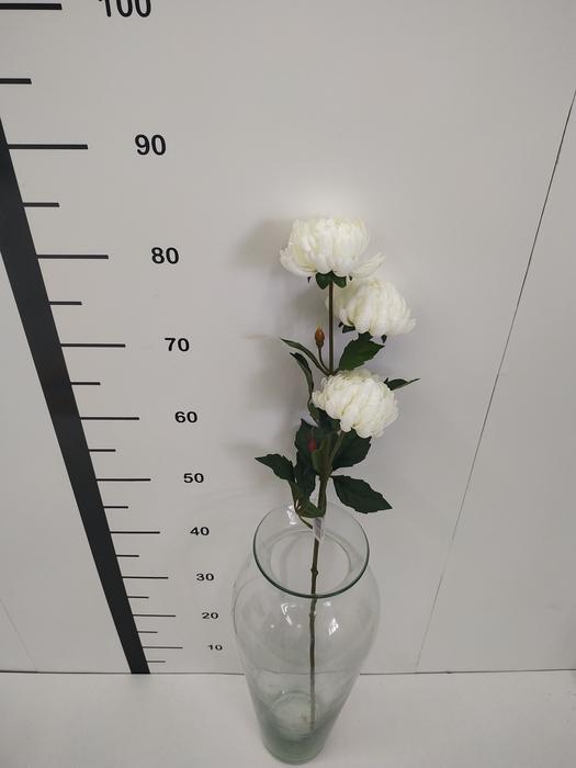 <h4>Haste chrysanthemum blanco</h4>