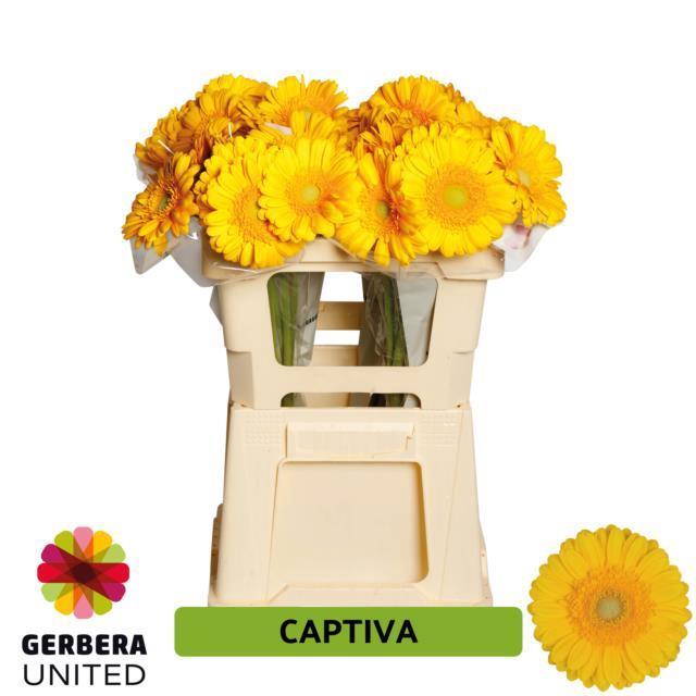 <h4>GE GR Captiva water</h4>