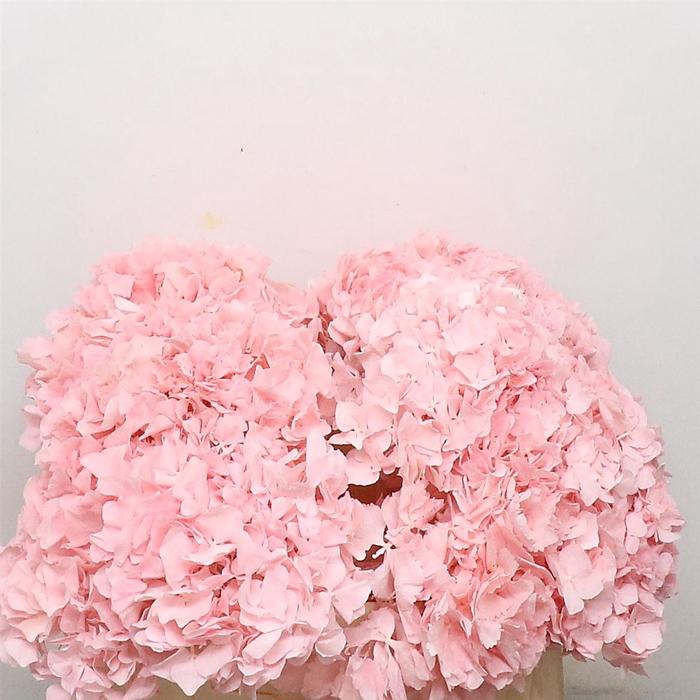 <h4>Dried Hydrangea Pink P Bunch</h4>