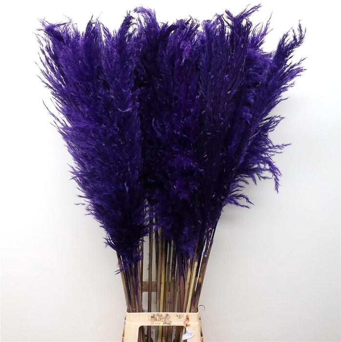 <h4>Corta Dried Purple120cm</h4>