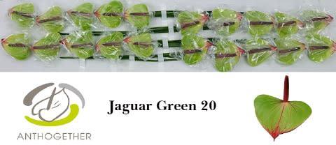 <h4>ANTH JAGUAR GREEN 20.</h4>