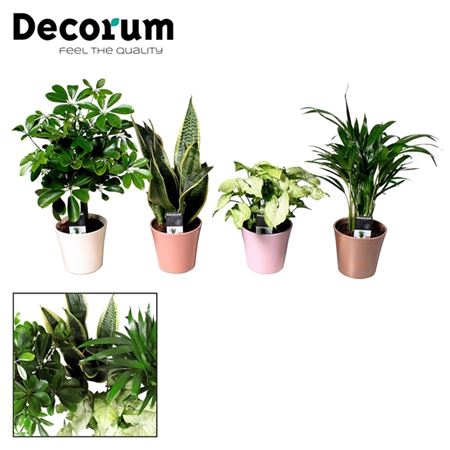<h4>Collectie Moments - Groenmix In Pot Coco (decorum)</h4>