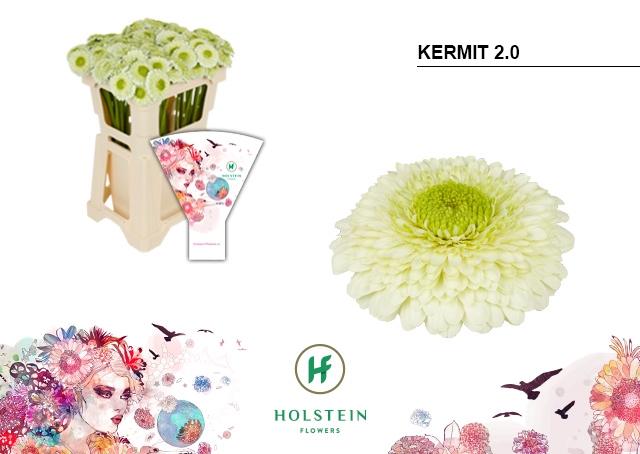 <h4>GE BV HOES GERPONI KERMIT 2.0</h4>