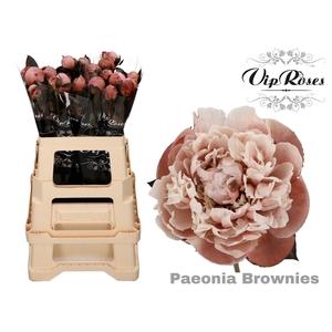 PAEONIA BROWNIES x 20