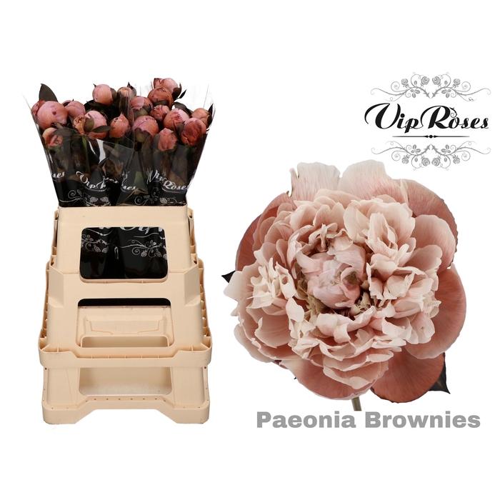 <h4>PAEONIA BROWNIES x 20</h4>