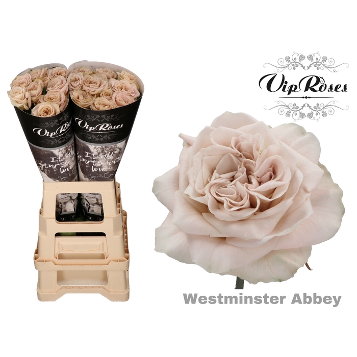 <h4>R GR WMINSTER ABBEY! x 20</h4>