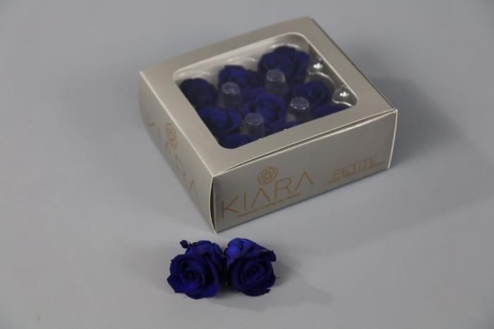 <h4>Rosa Preserved Ocean Blue Petite</h4>