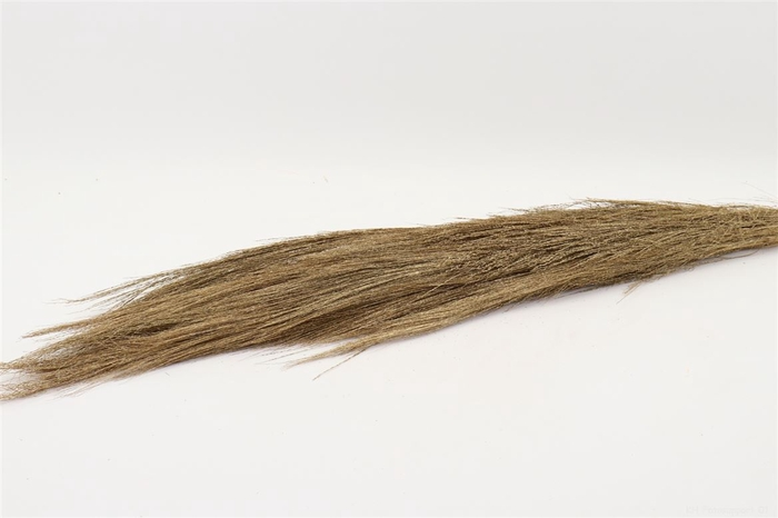 <h4>BUNCH CHINESE BROOM L110.0</h4>
