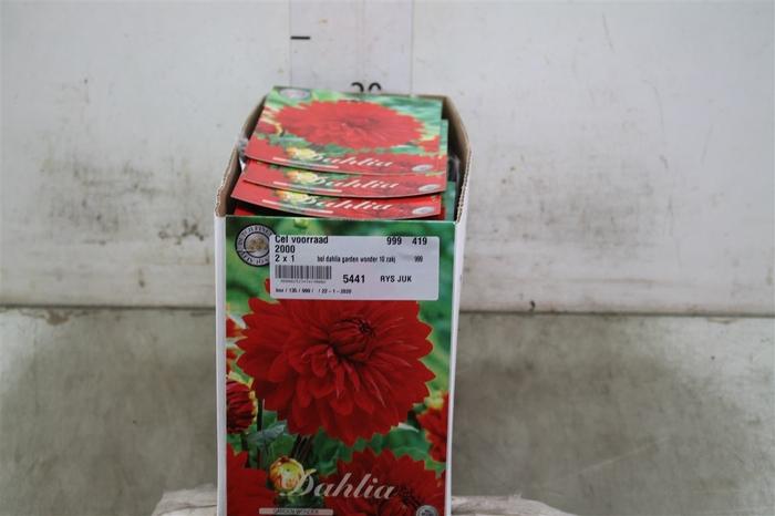 <h4>Bol Dahlia Garden Wonder 10 Zakjes X1</h4>