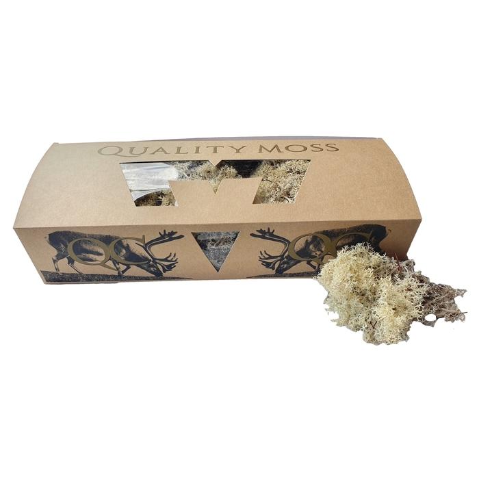 <h4>Reindeer moss 500gr in box naturel</h4>