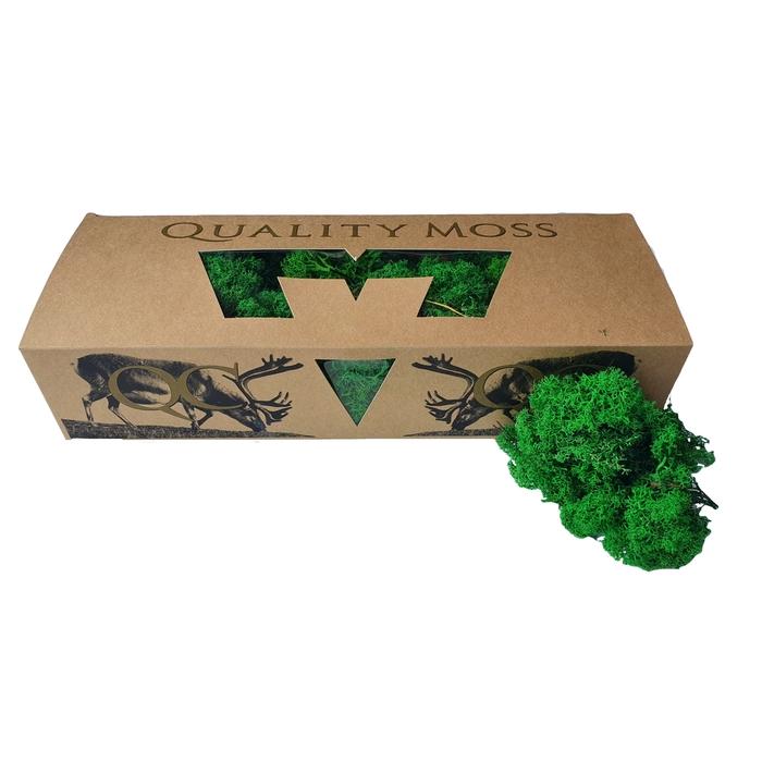 <h4>Reindeer moss 500gr in box Green</h4>