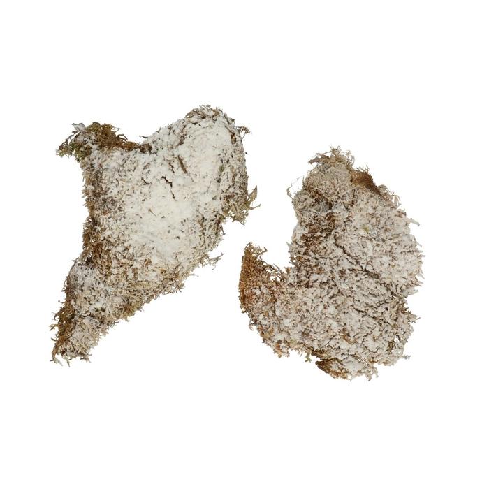 <h4>Droogdeco Plat moss 300g</h4>