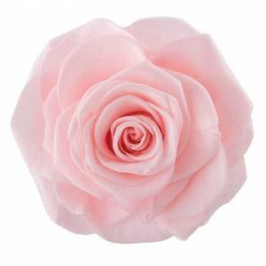 Rose Magna Pink Champagne