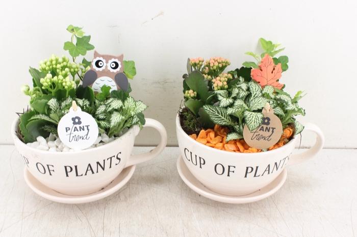 <h4>arr. PL - Cup of plants - oranje/wit</h4>