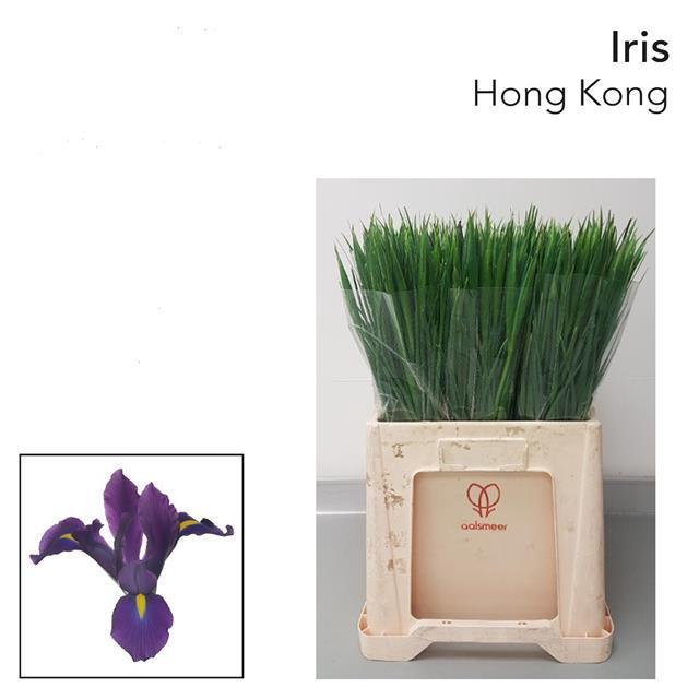 <h4>IRIS HONG KONG</h4>