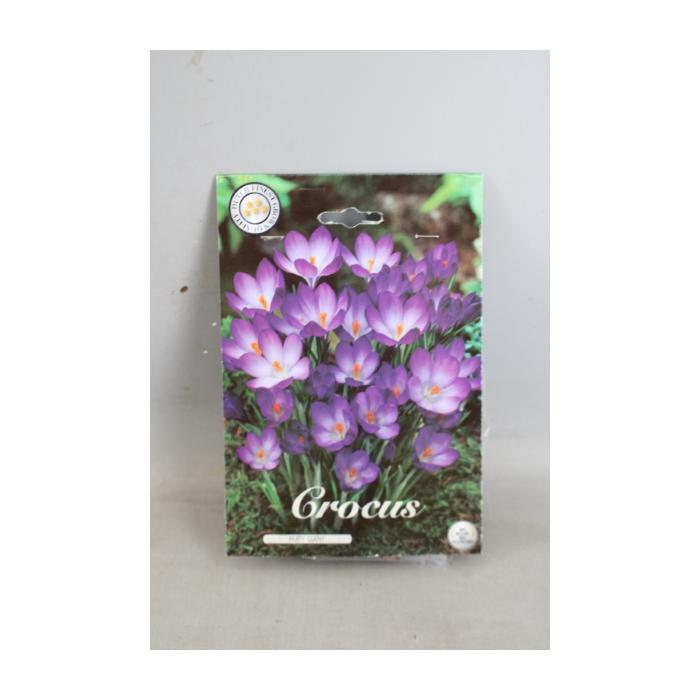 <h4>Crocus   ...flowerbulbs</h4>