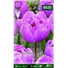 Z Tulipa Table Dance Double
