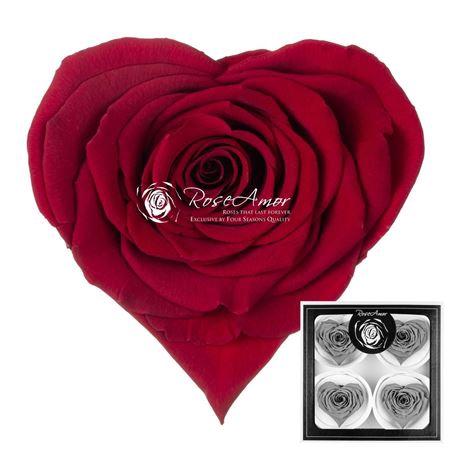 <h4>Pr 5.2 Heart Red-01 Bella</h4>