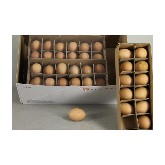 <h4>Egg Chicken Brown Box(12pcs)</h4>