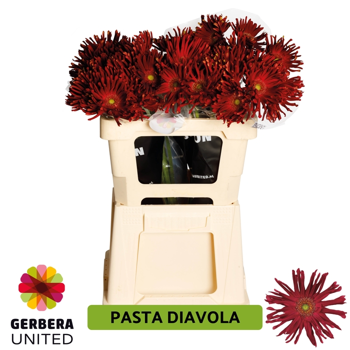 <h4>GE GR Pasta Diavola water</h4>