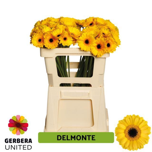 <h4>GE MI DELMONTE</h4>
