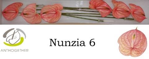 <h4>Anthurium andr. 'Nunzia'</h4>