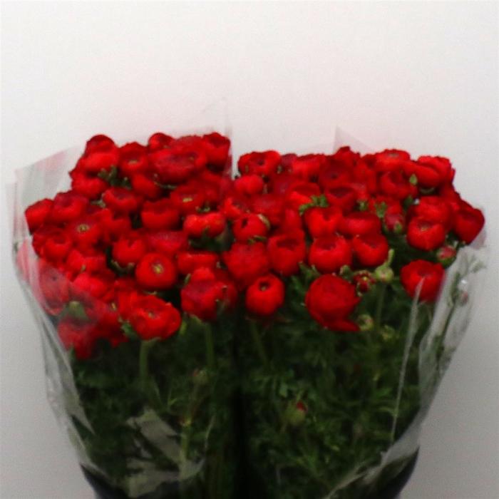 <h4>Ran El Red Super</h4>