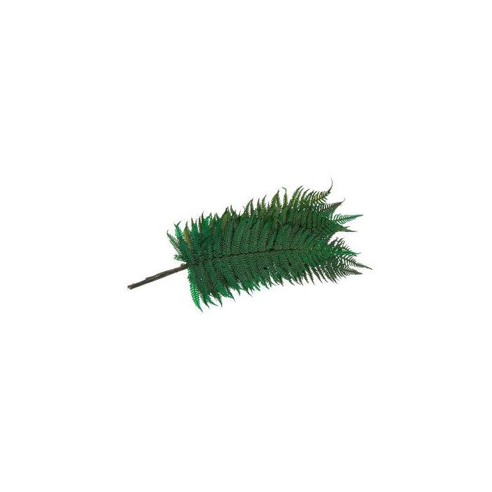 <h4>Fern Parchemin Green FPA/0102</h4>
