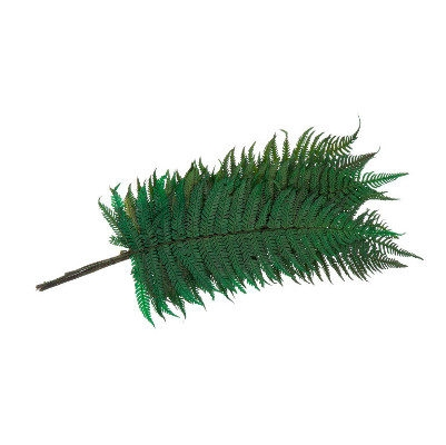 <h4>Fern Parchemin Green FPA/0102</h4>