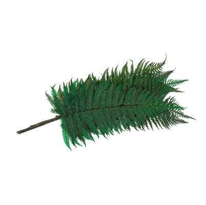 Fern Parchemin Green FPA/0102