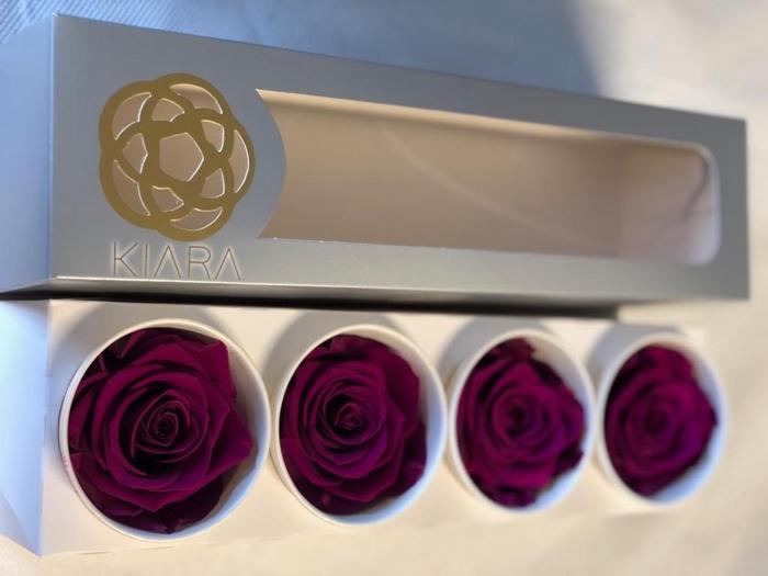 <h4>Super Rose Velvet Plume (4)</h4>