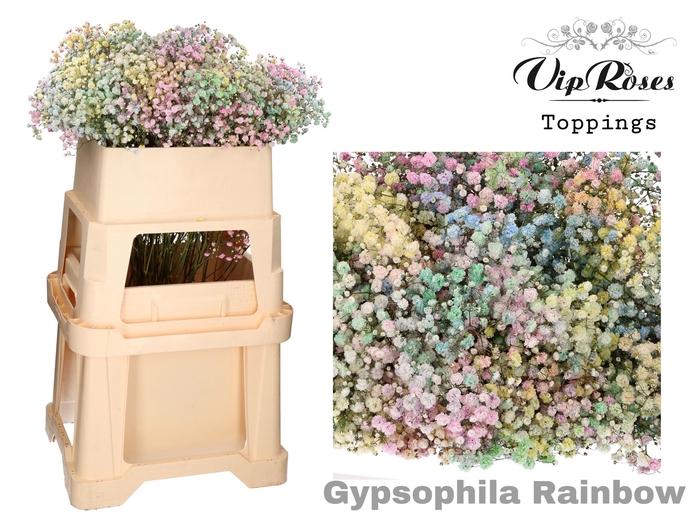 GYPS PA RAINBOW