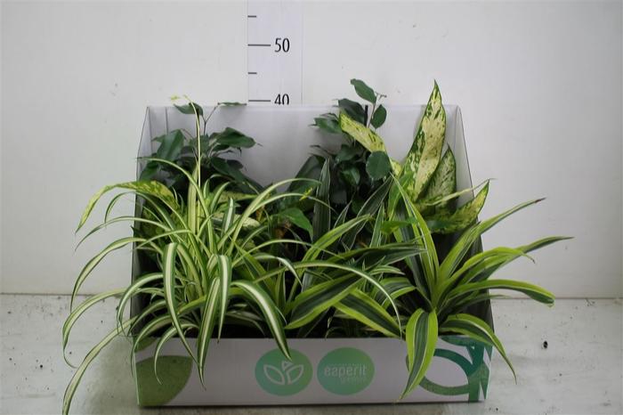 <h4>Plant Mix Middel Origin</h4>
