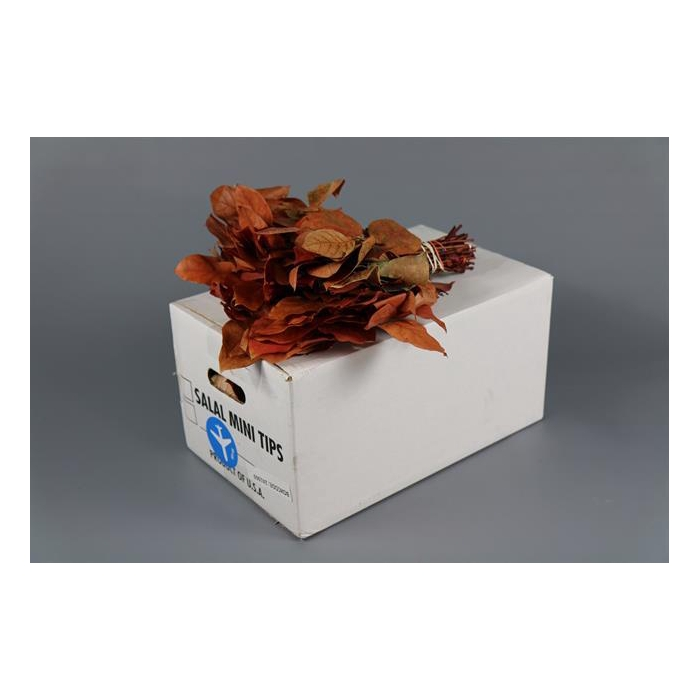 <h4>SALAL  MINI TIPS PRESERVED RED</h4>