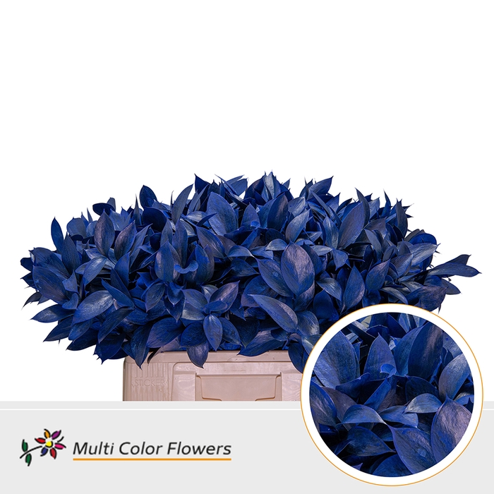 <h4>Ruscus Frost Blauw Donker</h4>