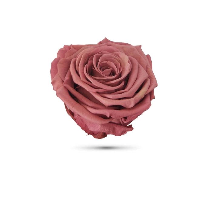 <h4>Rosa preservada cabeza violeta pastel</h4>