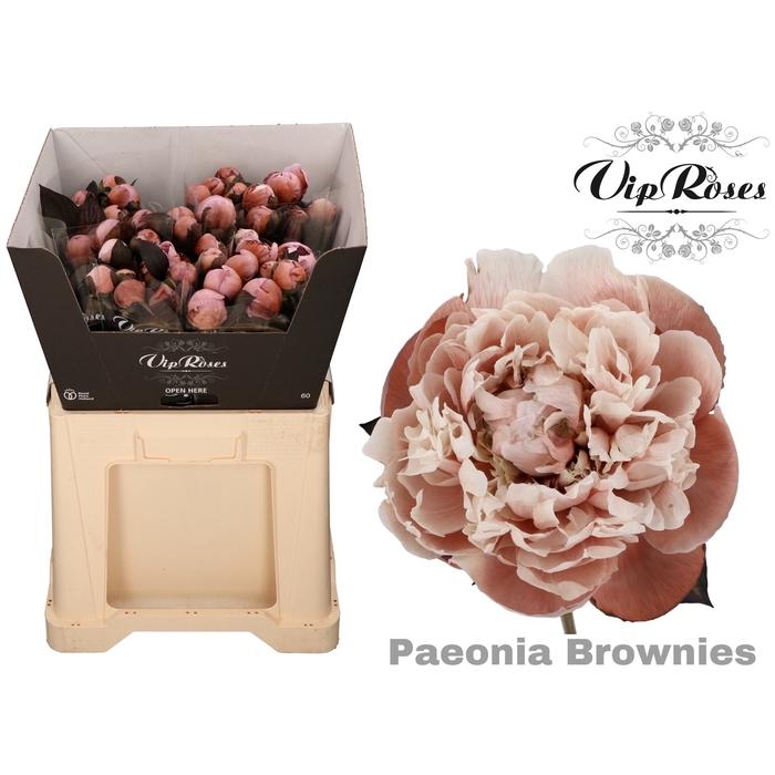 <h4>PAEONIA BROWNIES</h4>