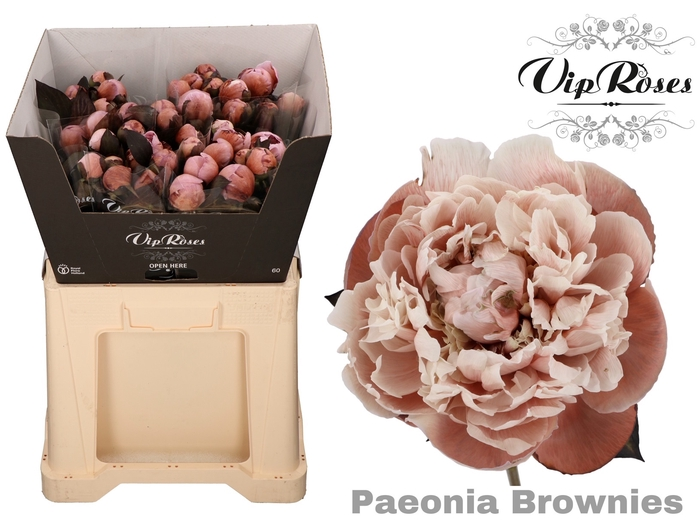 PAEONIA BROWNIES