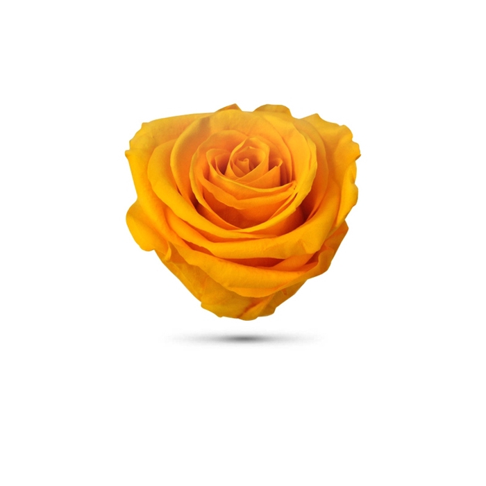 <h4>Rosa preservada cabeza amarillo oscuro</h4>