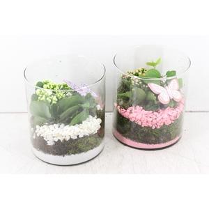 arr. PL - Cilinder breed x6 - roze/wit