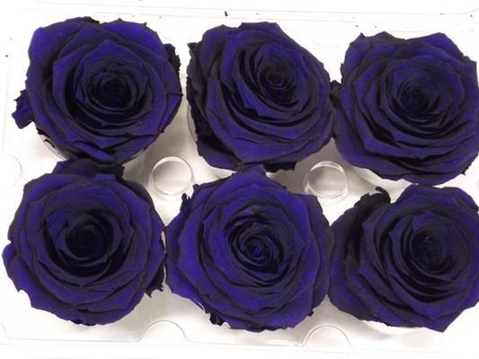 R Prs Blue Mayolica