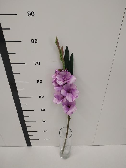 <h4>Haste gladiolo lila</h4>