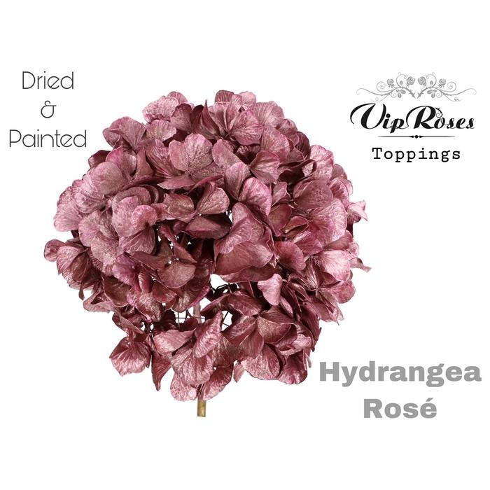 <h4>DRIED HYDRANGEA ROSE</h4>