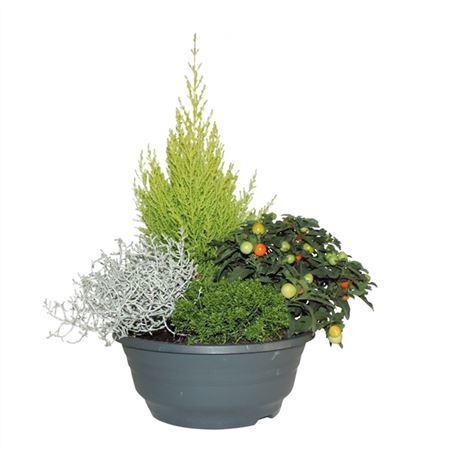 <h4>Opm Rs23-120107 Tuinplanten Gemengd Schaal</h4>