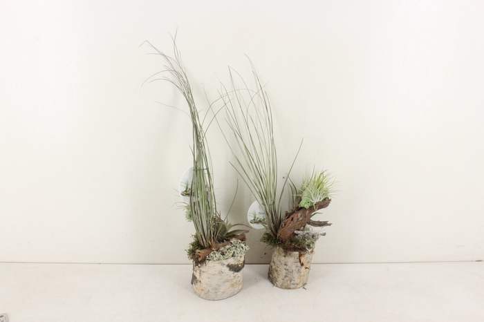 <h4>arr. GB11 Tillandsia - Berk pot 8inh</h4>