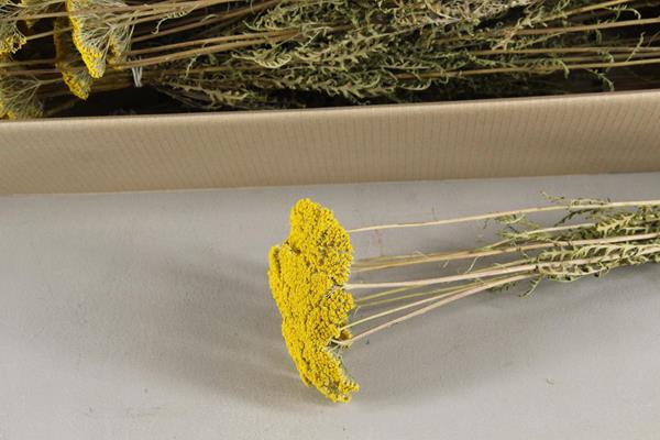 <h4>Df Achillea Bs 10st Yellow 40g</h4>