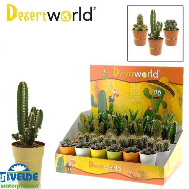 <h4>Cactus mix 6Ø 10cm</h4>
